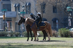 Philly mounted Police